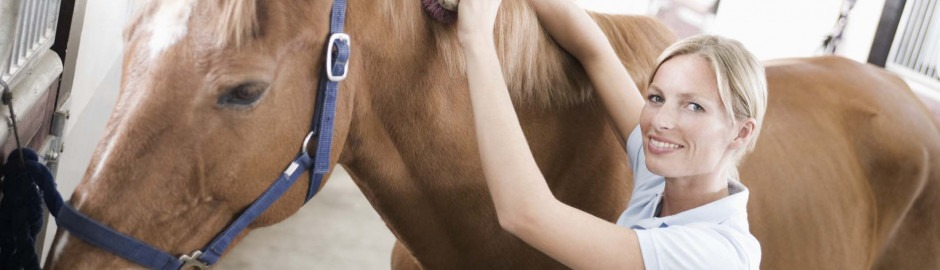 prêt personnel pour cheval | Franfinance