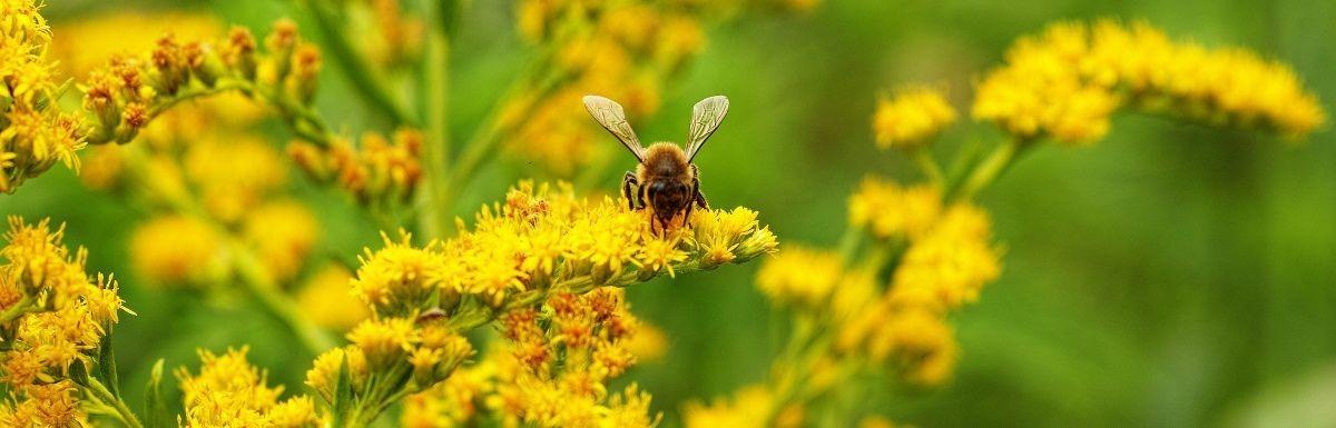 Les abeilles de Franfinance